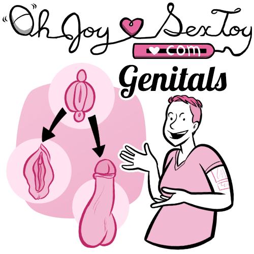 Homologous Genitals